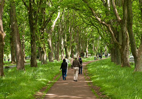 Cornwall Park is your urban oasis, rich with history, nature, farm-life and places to explore.  Come discover today.